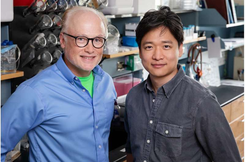 Study: Disease-causing stomach bug attacks energy generation in host cells