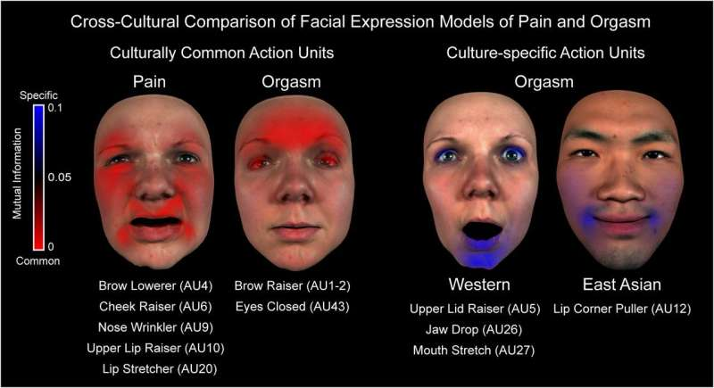 **Study finds orgasm-face and pain-face are not the same