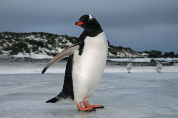 Study of penguin colonies at Antarctic island shows decline