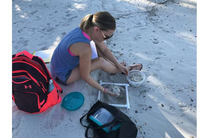 Study shows sea turtle nesting beaches threatened by microplastic pollution