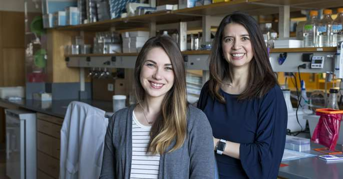 Study tracks protein's role in stem cell function