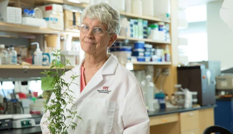 Tea infusions of wormwood plant cured schistosomiasis faster than commonly used drug in clinical trial