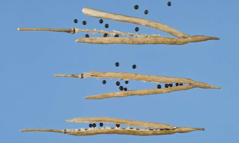 Temperature resilient crops now an 'achievable dream' say authors of new study