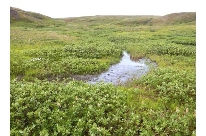 The Arctic carbon cycle is speeding up, study reports
