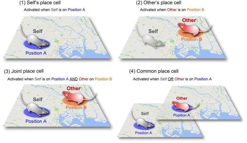 The brain's GPS has a buddy system