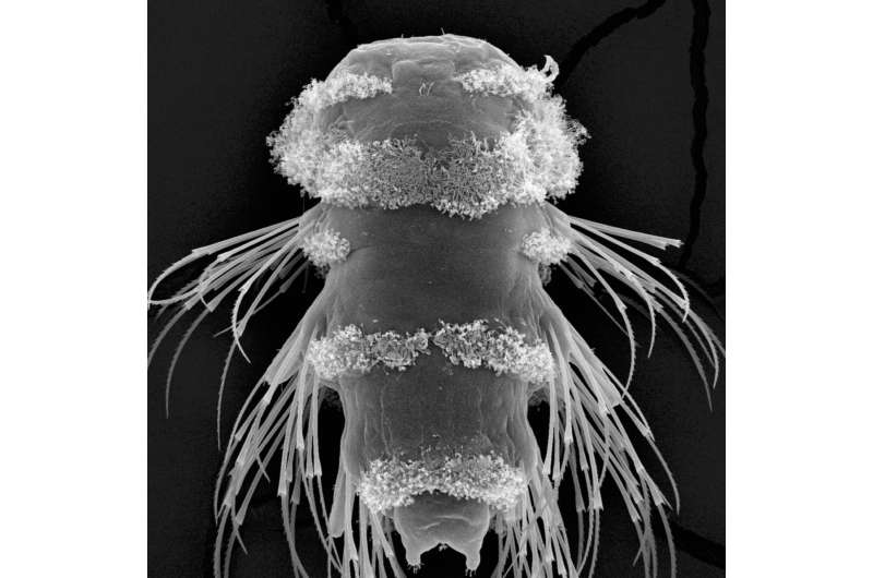 'The eyes have it' -- Photoreceptors in marine plankton form a depth gauge to aid survival