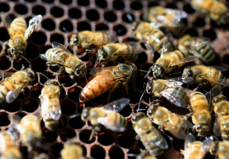 The first analysis released by IPBES was on the sorry state of bees and other pollinating animals