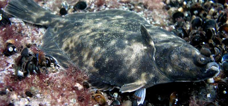 The first endemic Baltic Sea fish species received its name