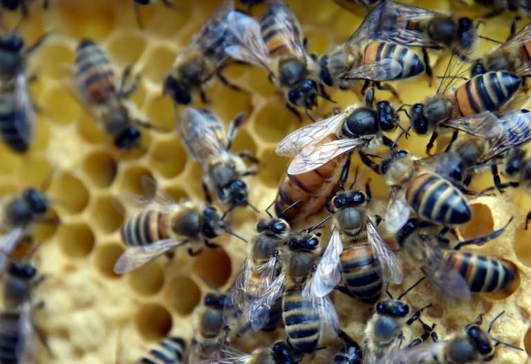 The pesticides can cause bees to become disorientated so they cannot find their way back to the hive