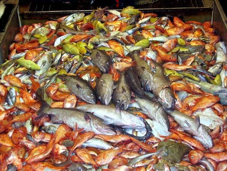 There aren't plenty of fish in the sea, so let's eat all that we catch