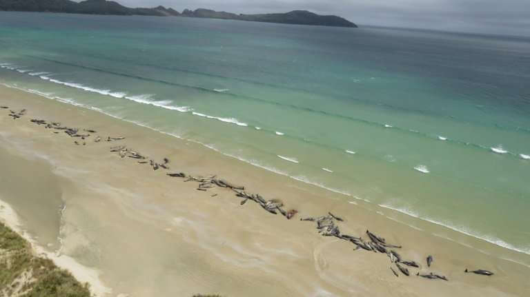 The remote location of the stranding meant the whales that had not yet died had to be euthanised