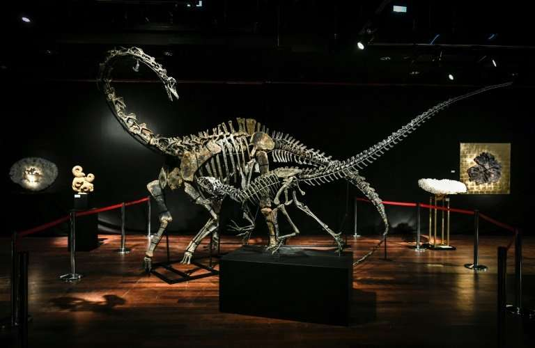 The same unnamed foreign buyer snapped up the skeletons of two late Jurassic  dinosaurs—a diplodocus (back) and an allosaurus (f