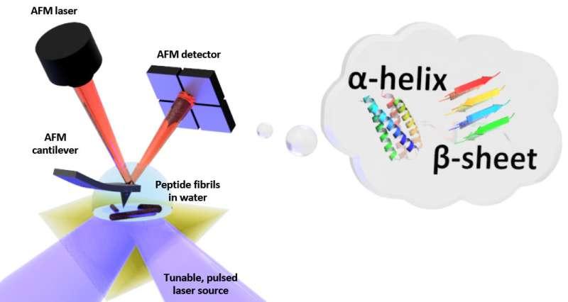 The shape in water: First nanoscale measurements of biomolecule folding in liquid