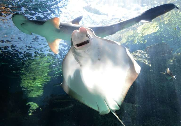 The study found that seagrass can form up to 62 percent of the bonnethead diet