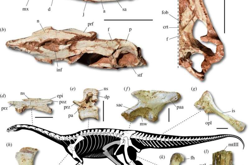 Three ancient skeletons, ancestors of giant dinosaurs, unearthed in Brazil