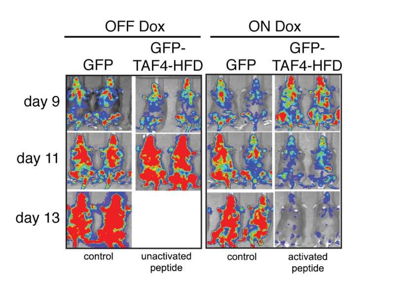 Throwing molecular wrench into gene control machine leads to 'melting away' of leukemia
