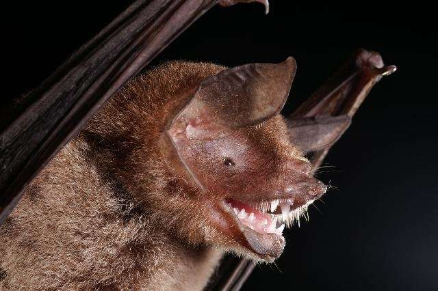 Time travel with bat guano