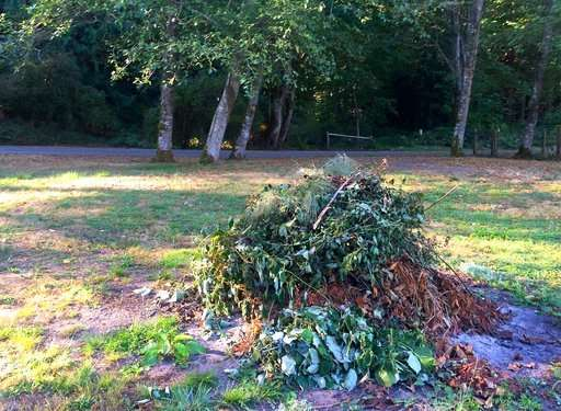 To protect pollinators, go easy on the fall garden cleanup