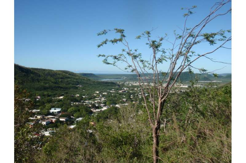 Trees grow more efficient leaves to compensate for hurricane damage