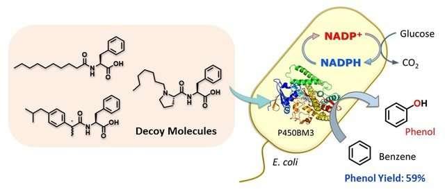 Tricking bacteria into hydroxylating benzene
