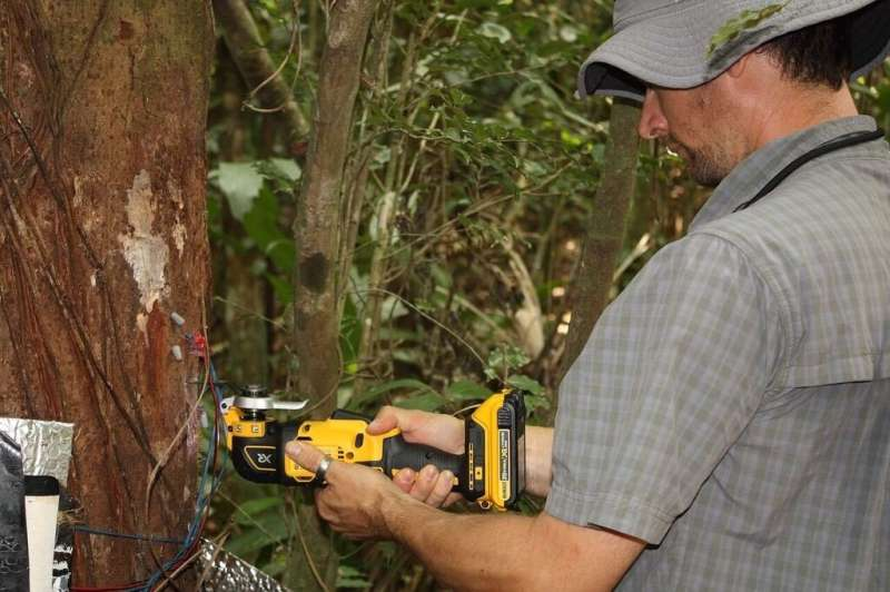 Tropical forest response to drought depends on age