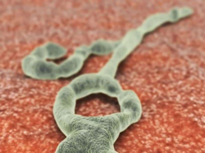 Two ebola patients who received experimental tx have recovered