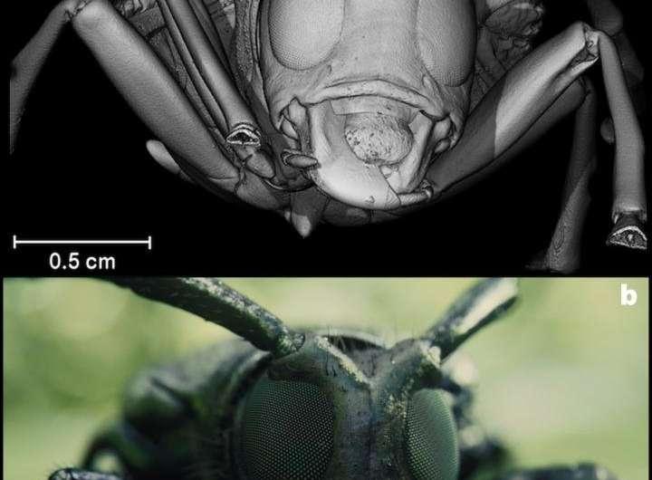 UGR scientist developed 3-D scans of beetles for Blade Runner 2049