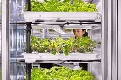 Urban food from vertical farming