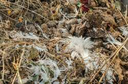 Using chicken feathers and solid remains of grapes to develop eco-friendly materials