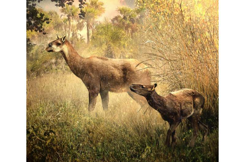 US, South American paleontologists ID two new Miocene mammals in Bolivia