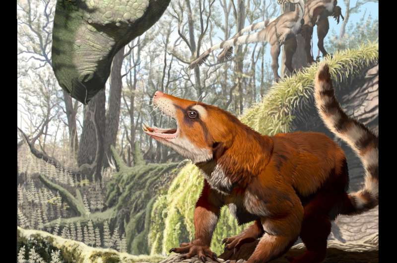 Utah fossil reveals global exodus of mammals' near relatives to major continents