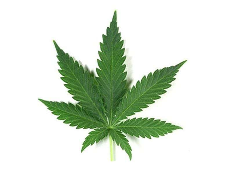 Vendors say pot eases morning sickness. will baby pay a price?