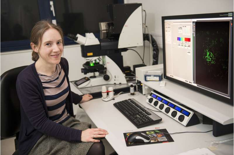 Viral probe gives ringside view of cell-to-cell combat