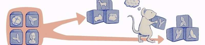 Visual recognition: Seeing the world through the eyes of rodents