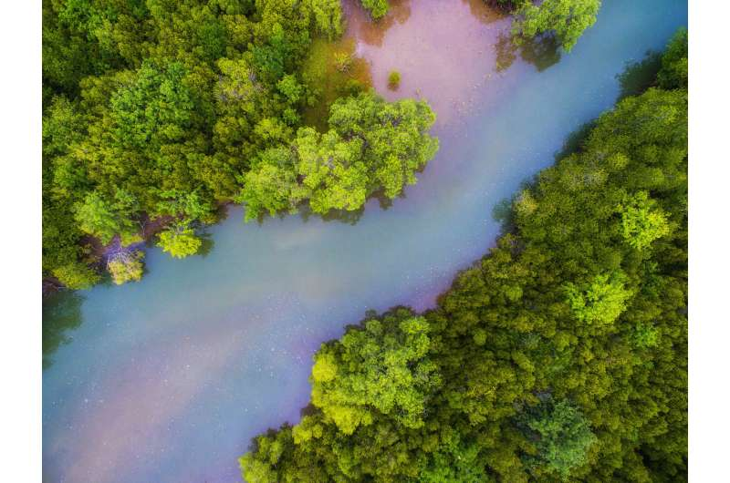 Wetlands hold the key to cutting emissions