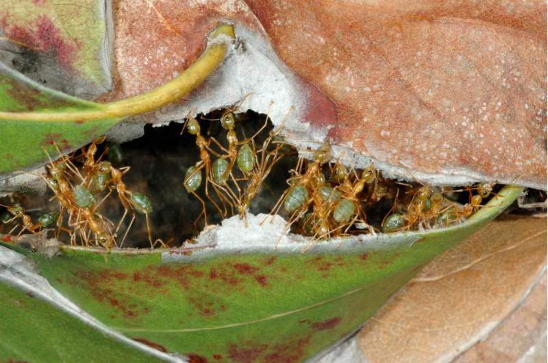 We've got apps and radars – but can ants predict rain?