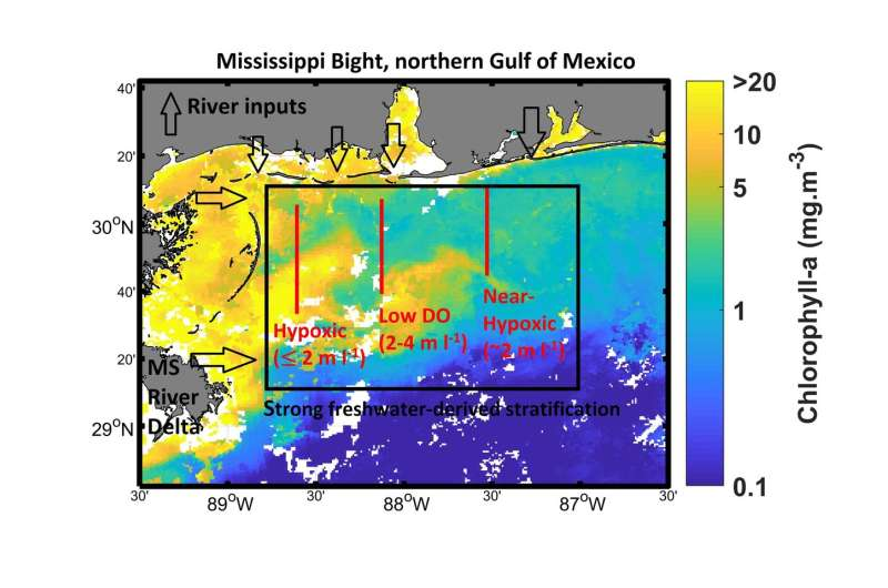 What could cause the Mississippi Bight to become hypoxic?