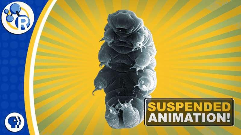 What makes tardigrades such great survivors (video)