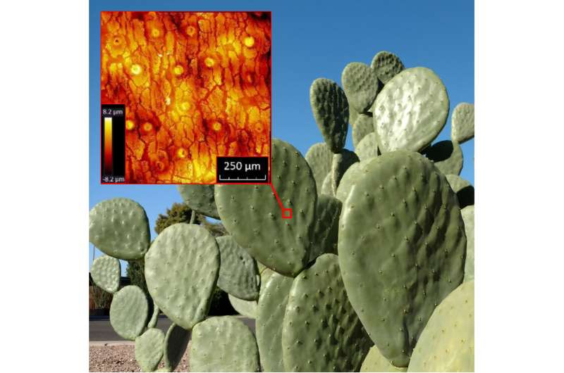 What smart hazmat suits and Sonora cactus skins have in common
