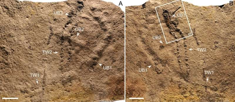 When did animals leave first footprint on Earth?