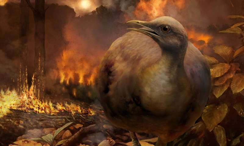 When the dinosaurs died, so did forests -- and tree-dwelling birds
