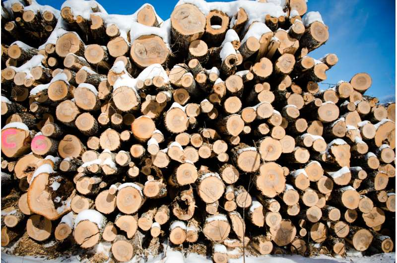 Whole-tree logging may not hinder plant biodiversity