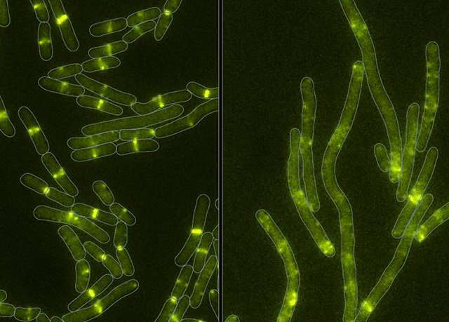 With a microbe-produced toxin, bacteria prove old dogs can learn new tricks