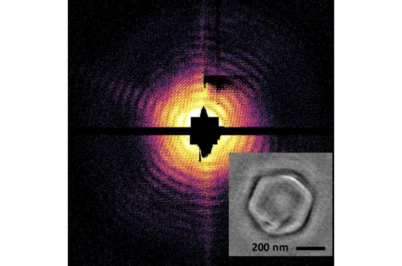 With laser light, scientists create first X-ray holographic images of viruses