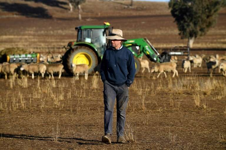 With no feed, farmers have been forced to ship in grain or hay from other parts of the country to keep sheep and cattle alive