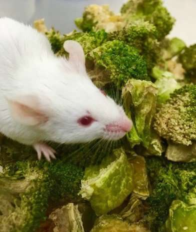 With these special bacteria, a broccoli a day can keep the cancer doctor away