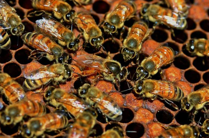 Worker bees select royal (sub)family members, not their own supersisters, to be new queens