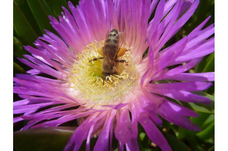 Worldwide importance of honey bees for natural habitats captured in new report