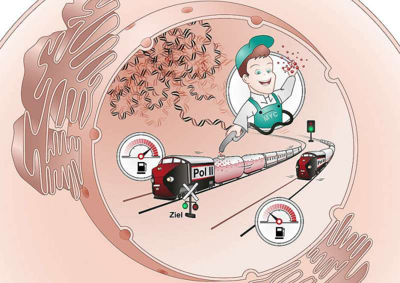"A cellular protein as a ""Gas Pump Attendant"" of Cancer Development"