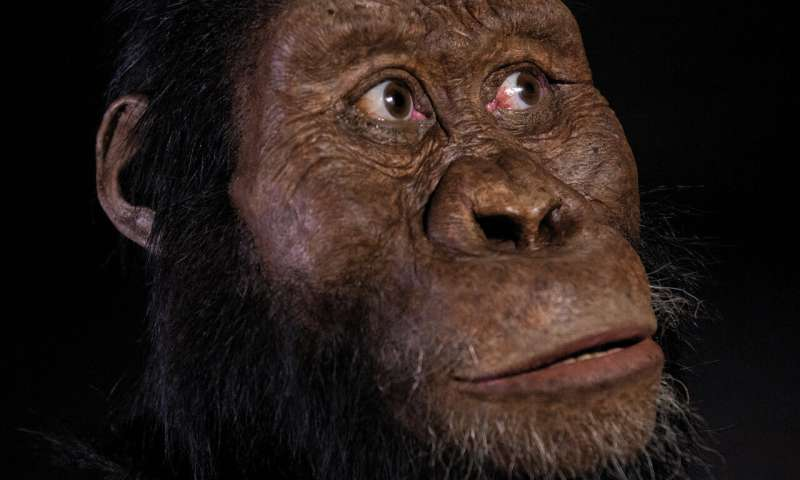 A face for Lucy's ancestor